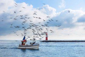 Fischerboot bei Warnemünde